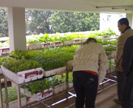 Vườn rau sạch để dùng riêng cho gia đình